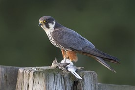 Bird watching - example of a popular hobby