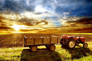 Agriculture photo