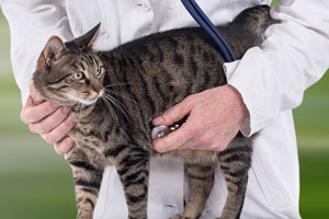 Veterinarian photo